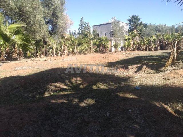 ارض للبيع - 2