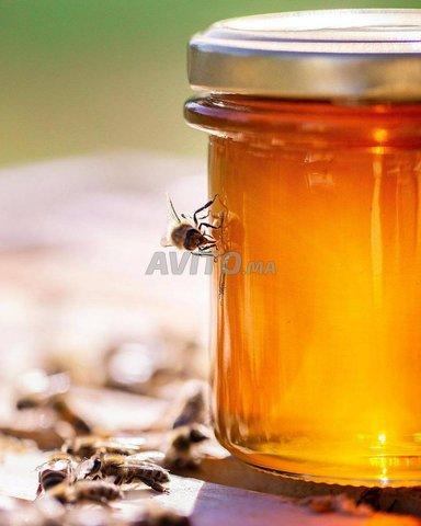 عسل الحر بالتقسيط وبالجملة - 1