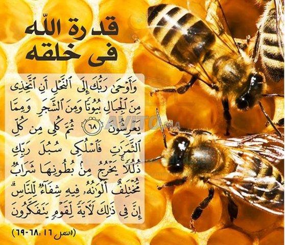 عسل الحر بالتقسيط وبالجملة - 4