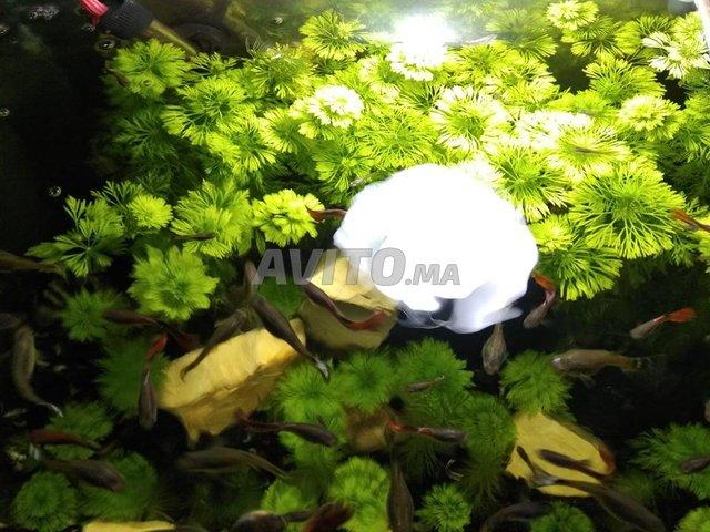 aquarium planté avec guppy - 1
