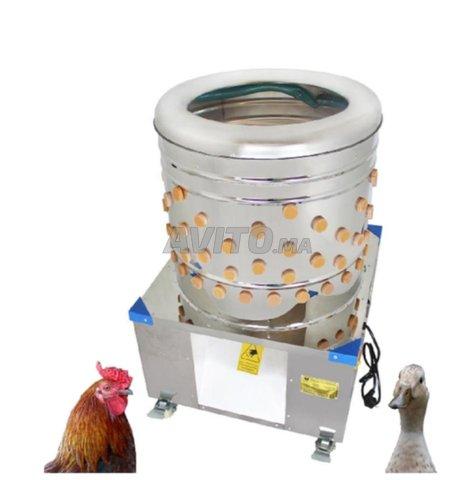 رياشة وناتفة لجميع انواع الدجاج - 3
