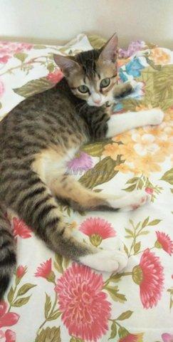 Vente de chat mâle  - 2