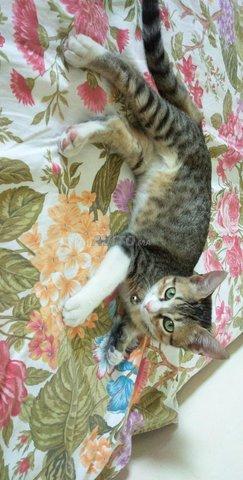 Vente de chat mâle  - 1