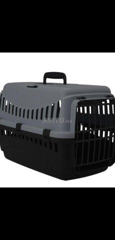 cage de transport pour chat - 1