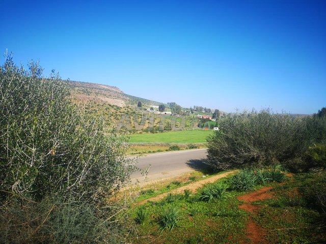 1 ha titré sur la route de Benslimane Casa Fdalat - 4
