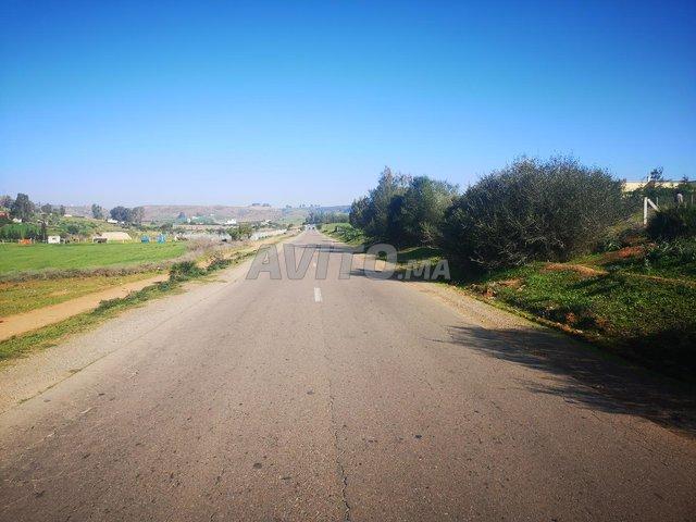1 ha titré sur la route de Benslimane Casa Fdalat - 2