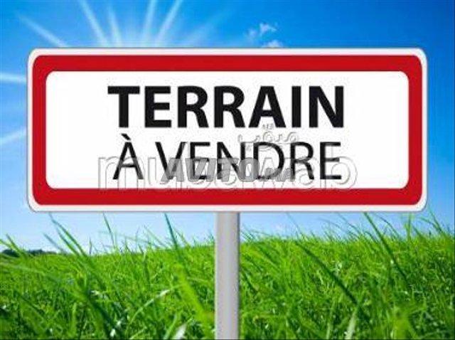 Terrain  - 1