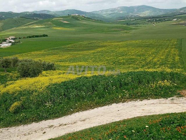 Terrain et ferme en Vente à Taounate - 4