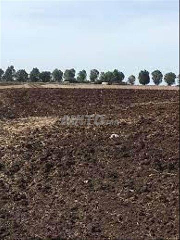 Terrain et ferme en Vente à Benslimane - 1