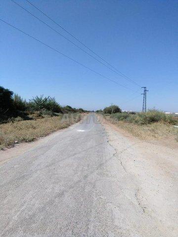 عمارة تجارية 320 متر على طريق رءيسية  سيدي جابر - 3