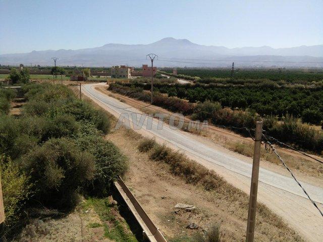 عمارة تجارية 320 متر على طريق رءيسية  سيدي جابر - 4