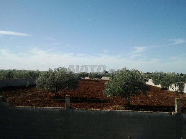 Terrain et ferme en Vente à Ouled Ayad - 1