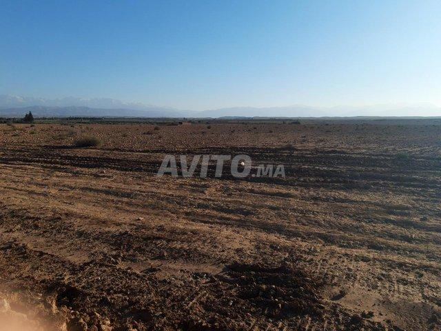 Terrain de 15 hectares titré à Marrakech - 1