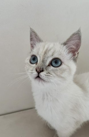 Belle chatte blanche - 5