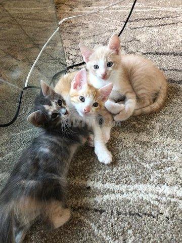 Magnifiques petits chats - 2