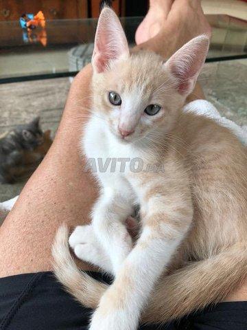 Magnifiques petits chats - 1