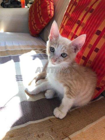 Magnifiques petits chats - 4
