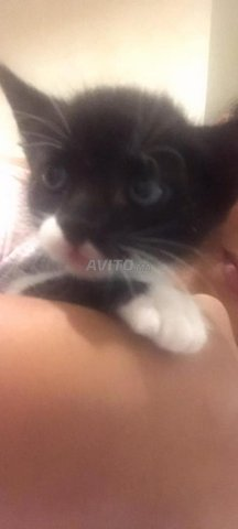 Des bebes chats a adopter  - 2