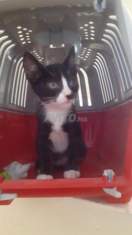 Chat en noir et blanc  - 1