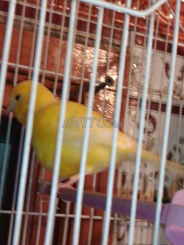 Canards femelle  - 3
