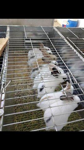 lapins a vendre - 2