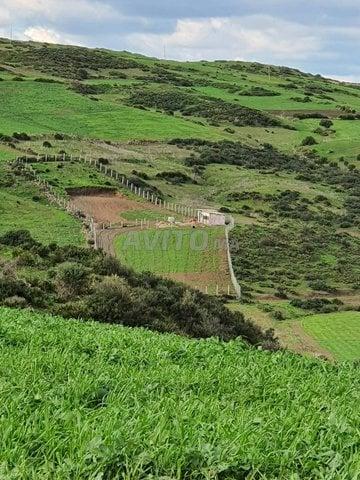 Terrain et ferme en Vente à Tanger - 1