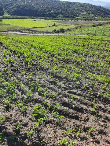 Terrain et ferme en Vente à Tanger - 2