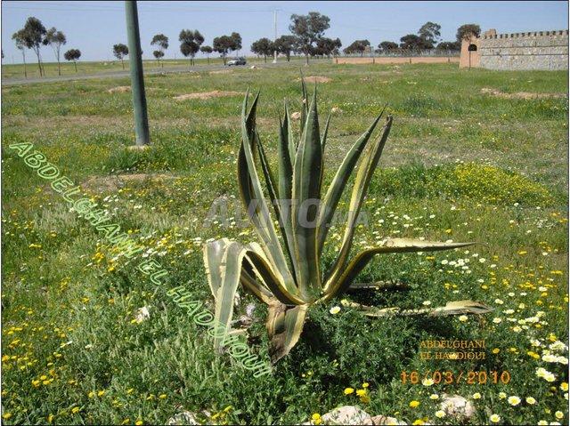 Terrain et ferme en Vente à Sidi Bou Othmane - 1