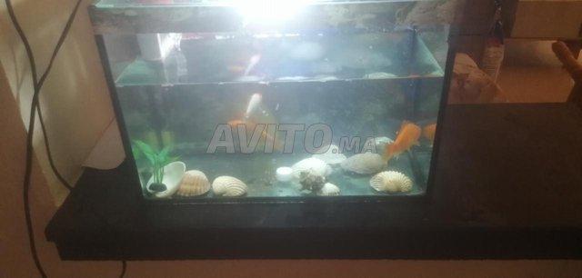 aquarium monobloc a vendre  - 2