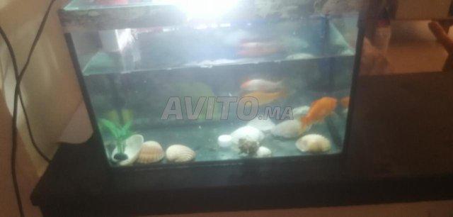 aquarium monobloc a vendre  - 6
