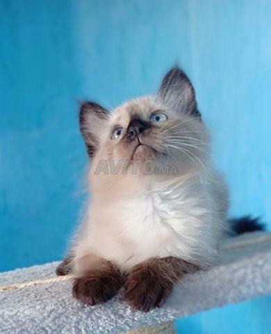 Toutes genre de chatons chez just4you animal - 1