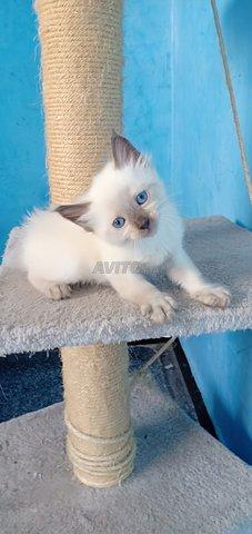 Toutes genre de chatons chez just4you animal - 2