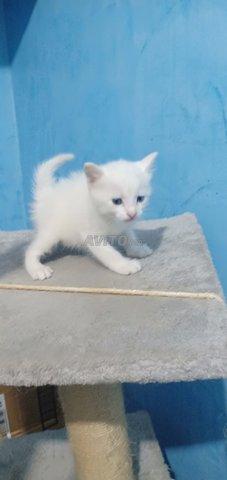 Toutes genre de chatons chez just4you animal - 4