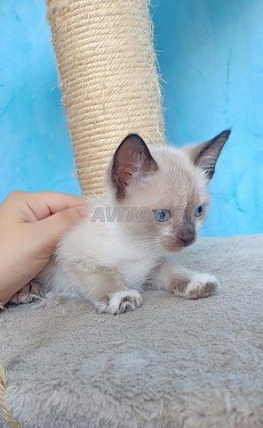 Toutes genre de chatons chez just4you animal - 3