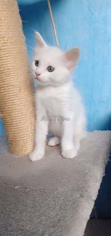 Toutes genre de chatons chez just4you animal - 6