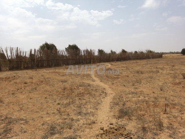 Terrain 5000m2 avec villa grands œuvre à Belfaa - 6