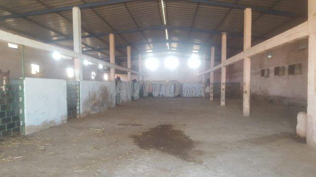 Ferme avec 2 depot 10000m mediouna - 2