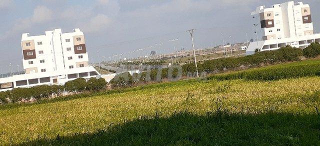 Terrain à vendre 48000m2 Haouzia-El jadida - 4