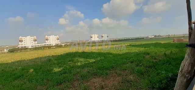 Terrain à vendre 48000m2 Haouzia-El jadida - 5