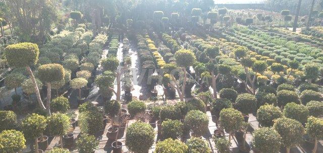 entretien et aménagement d'espaces verts et fermés - 4