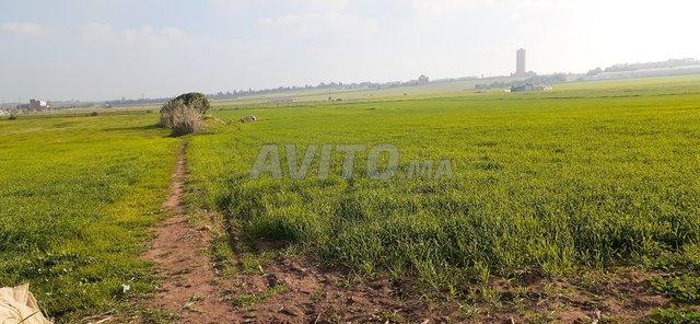 Terrain à vendre 48000m2 Haouzia-El jadida - 6