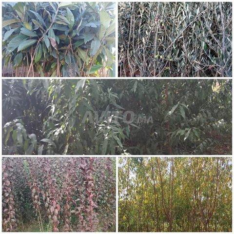 arbres fruitiers  - 5