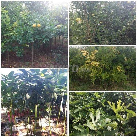 arbres fruitiers  - 3