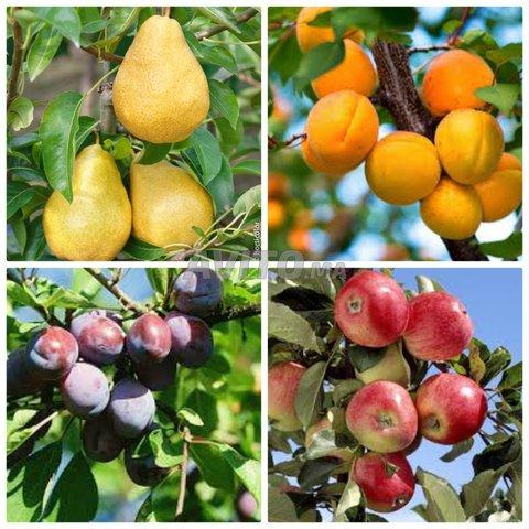 arbres fruitiers  - 1