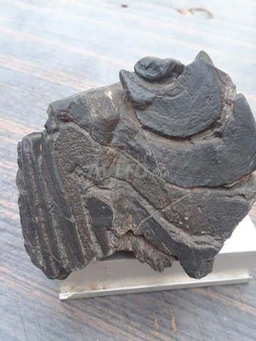 collectionneur météorites - 1